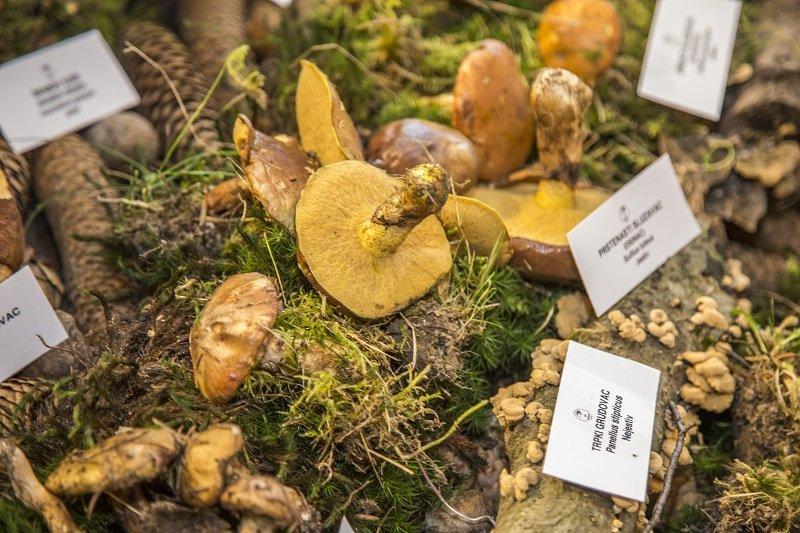 Festival gljiva i ljekovitog bilja u Parku prirode Lonjsko polje1