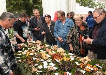 Međunarodni-festival-gljiva-u-Oroslavju1
